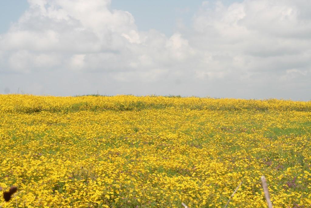 Ade-Blumen