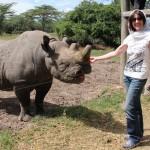 Cuddle a rhino