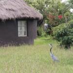 Besuch vom Wildlife