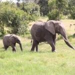 große Tiere