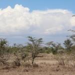 Trockenheit und Wolken