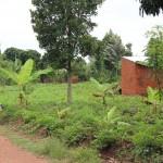 Grünes Dorf