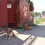 Eingang zum Hundezentrum