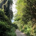 üppiger Wald