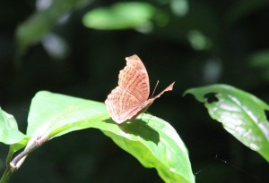 160212_003_Kakamega_Forest