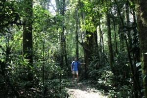 160212_008_Kakamega_Forest